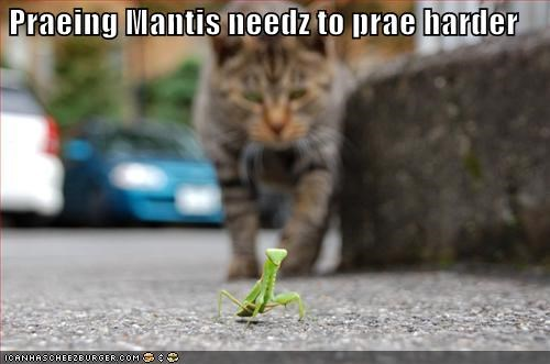insects lolcats praying preying mantis - 484885248