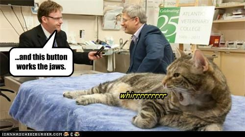 Cats political pictures stephen harper