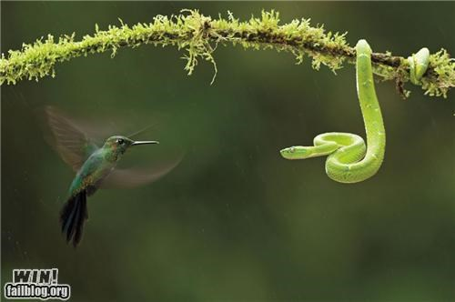 awesome,bird,mother nature ftw,snake