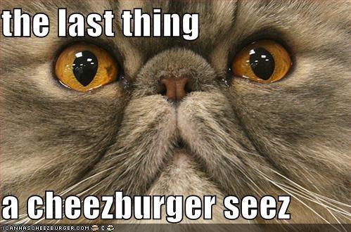 Cheezburger Image 484947200