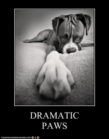 best of the week,boxer,dramatic,Hall of Fame,homophone,pause,paws,pun,puppy