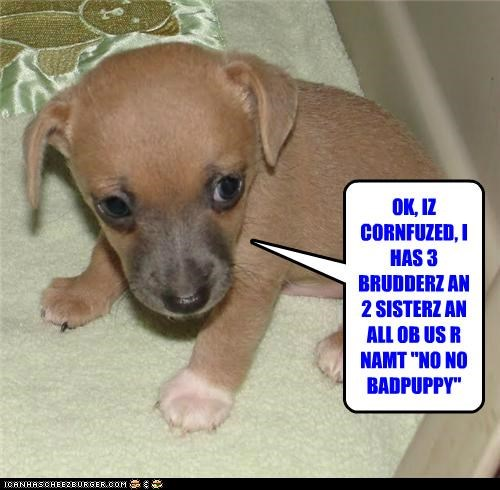 "OK, IZ CORNFUZED, I HAS 3 BRUDDERZ AN 2 SISTERZ AN ALL OB US R NAMT ""NO NO BADPUPPY"""