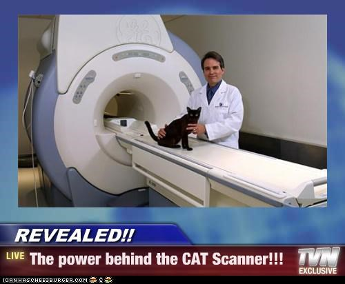 behind caption captioned cat cat scan power pun revealed scanner - 4850840832