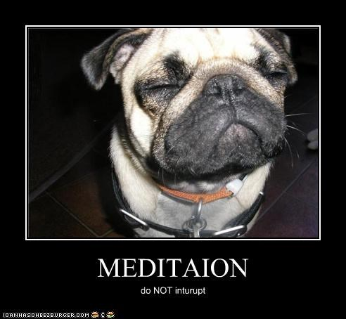 advice do not interrupt meditating meditation pug - 4850985984