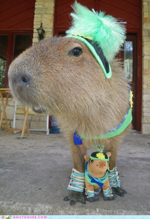acting like animals,capybara,costume,crying,cufflinks,dressed up,embarrassed,excuses,friend,opinion,outfit,overboard,stuffed animal,upset