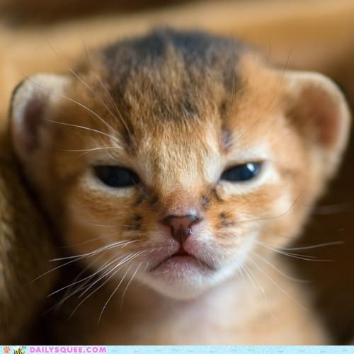 angry baby bottle cat cranky danger grumpy Hall of Fame kitten milk need system trouble tuna upset warning
