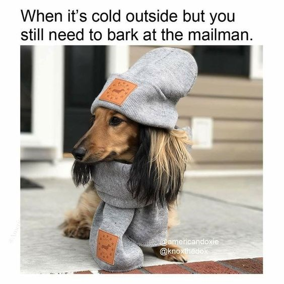 dog dressed in hat and scarf going out in the cold to bark