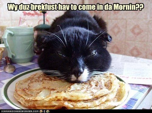 breakfast,caption,captioned,cat,cranky,do not want,happen,morning,noms,pancakes,problem,why