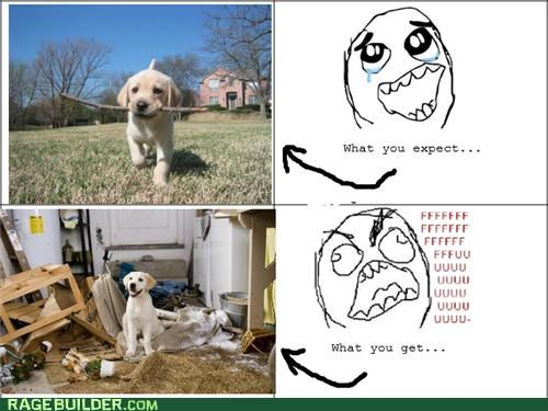 dogs pets puppies Rage Comics - 4852942592
