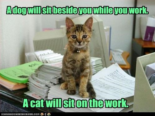 A dog will sit beside you while you work. A cat will sit on the work.