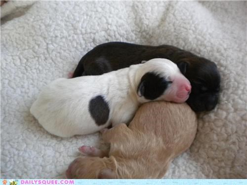 baby little potatoes one week old pile puppies puppy reader squees sleeping tiny