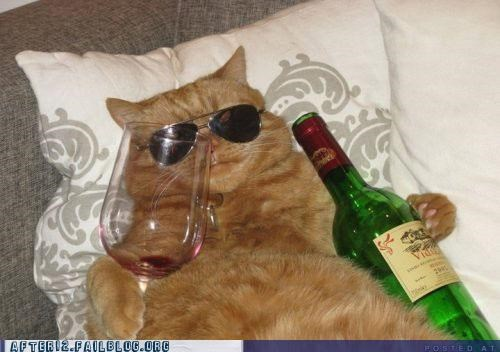 aviators cat wine - 4853639168