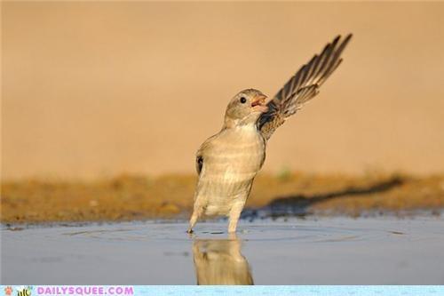 acting like animals audition bird choir ensemble grateful proud sining song soprano - 4853932288