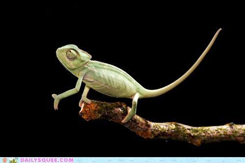 acting like animals end lizard poem rewrite stick walking - 4854131968