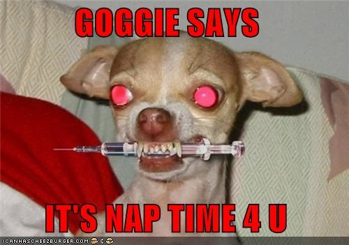 GOGGIE SAYS  IT'S NAP TIME 4 U