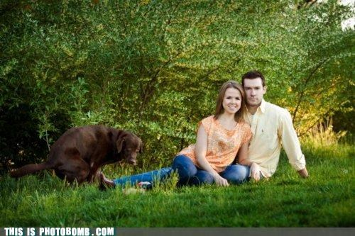 Animal Bomb background couple dogs lab poop portrait