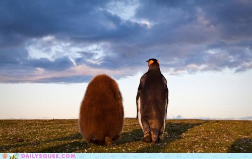 adventure chick foregoing happiness hierarchy journey parent penguin penguins together togetherness