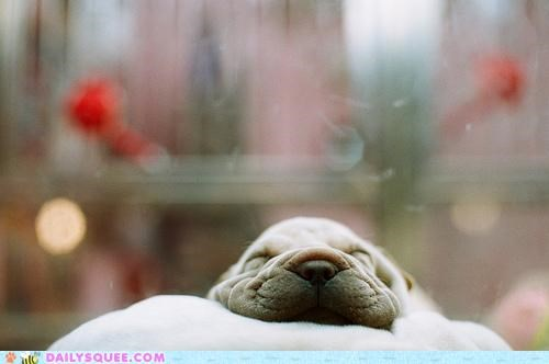 asleep,bed,bliss,dogs,expression,face,Hall of Fame,happy,innocence,perfect,puppy,sleep