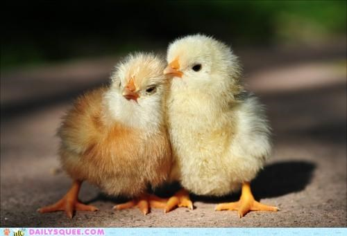 Babies baby chick chicken chickens chicks friend friendship helping lean lean on me
