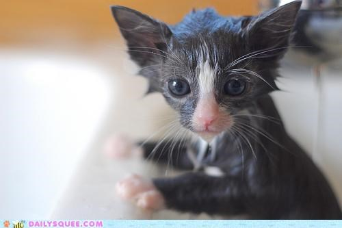 awake awakening bath bathing cat do not want kitten morning rude - 4854896896