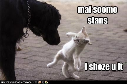 caption captioned cat demonstration dogs kitten let me my show showing stance sumo you
