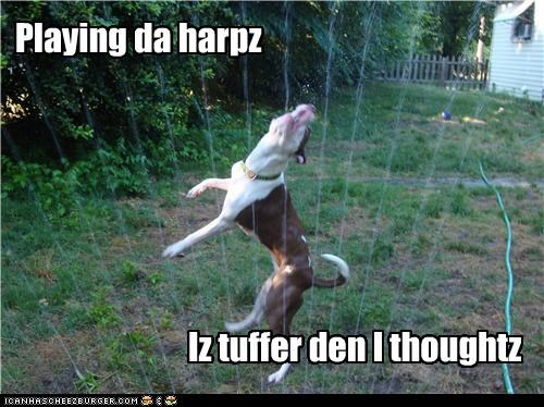 Playing da harpz Iz tuffer den I thoughtz