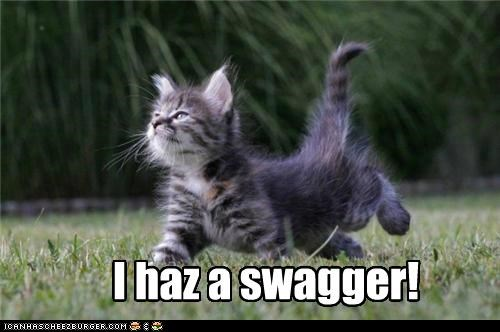 best of the week caption captioned cat Hall of Fame i has kitten swagger - 4855541760