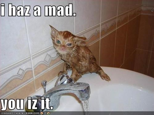 angry bathroom lolcats mad orange sink wet - 485555456