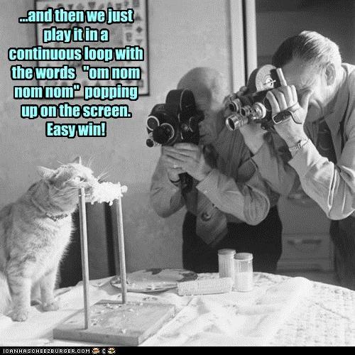 animal cat funny Photo - 4856060160