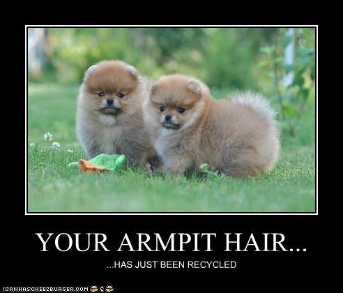 YOUR ARMPIT HAIR... ...HAS JUST BEEN RECYCLED