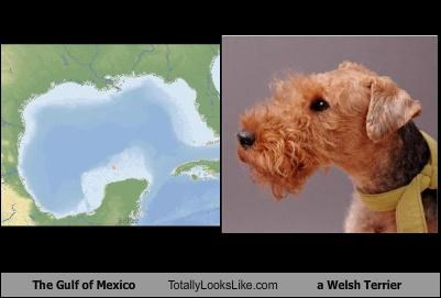 animals dogs geography gulf of mexico welsh terrier - 4857873152