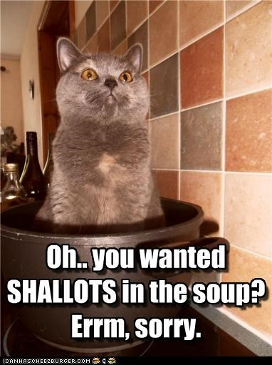 caption,captioned,cat,misheard,misunderstanding,shallots,sorry,soup