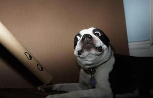 doggeh Sundog - 4859831296