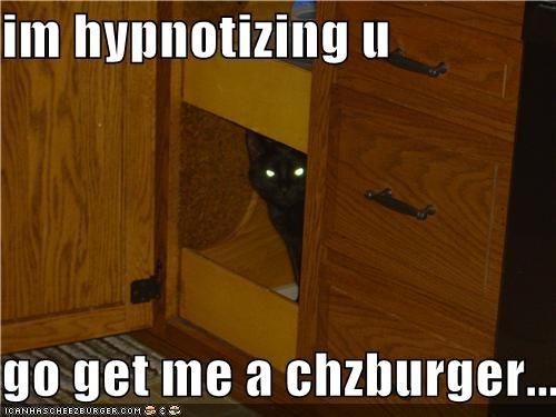 Cheezburger Image 4859916544