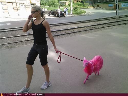 cute dye lamb pink wtf - 4860322816