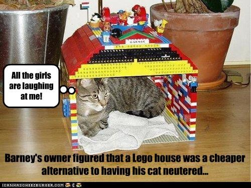 Barney's owner figured that a Lego house was a cheaper alternative to having his cat neutered... All the girls are laughing at me!