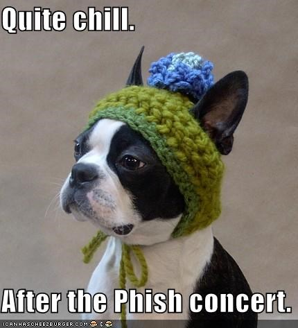 after best of the week boston terrier chill concert Hall of Fame hat hippie Knitted phish quite