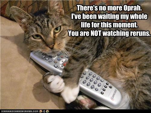 caption captioned cat denied life moment more no not oprah permission remote reruns waiting watching whole - 4861127424