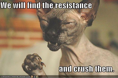 angry,caption,captioned,cat,crush,find,resistance,sphinx,will
