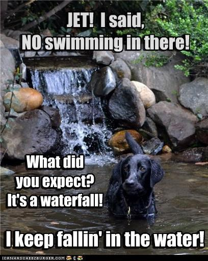 falling,labrador,no,pond,swim,swimming,water,waterfall,wet