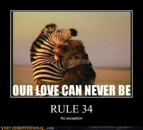 animals hilarious lion love no exception Rule 34 wtf zebra