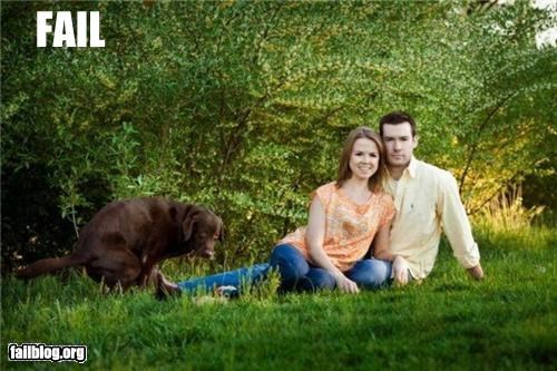 date dogs g rated photobomb poop romantic - 4864440832