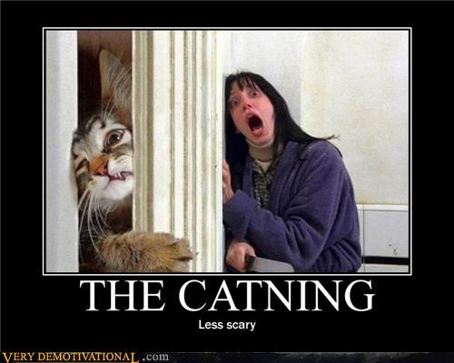 cat hilarious not scary shining wtf