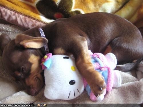 blanket cyoot pupppeh ob teh day dachshund hello kitty nap plushy puppy sleep - 4864733440