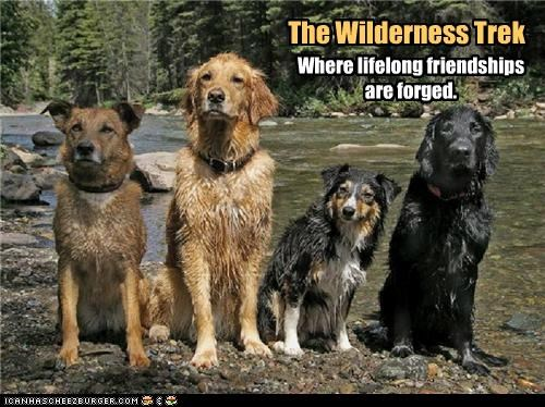 australian shepherd forged friendships golden retriever labrador lifelong location mixed breed trek whatbreed where wilderness - 4865200640