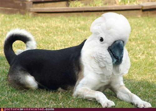 animals dogs griffon photoshop wtf - 4865275392