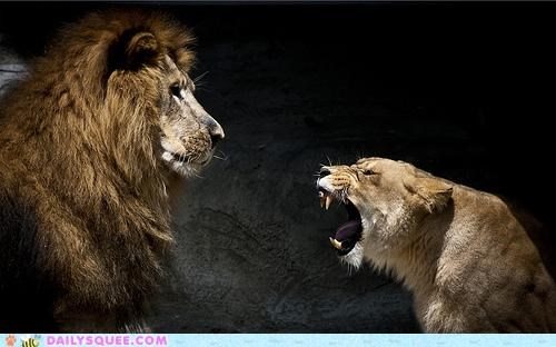 acting like animals angry confrontation Hall of Fame lion lioness lions meaning no problem upset - 4865364992