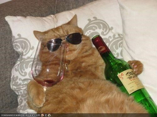 best of the week bottle cyoot kitteh of teh day drunk oh yeah sunglasses wine - 4865437184