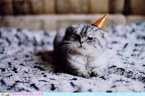 acting like animals,birthday,cat,disappointed,disaster,hat,moping,Party,party hat,Sad,upset
