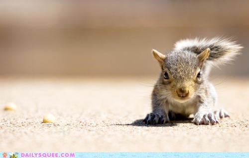 angry angry eyes baby cute disgruntled eyes squirrel Staring tiny - 4865559040
